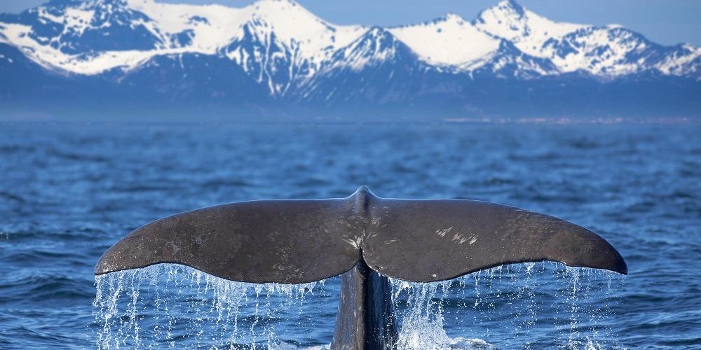 Was sind eigentlich Bitcoin Whales?